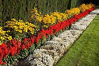 Rows of white, red and yellow flowers, Duncan Botanical Garden, Manito Park, Spokane, WA, USA.