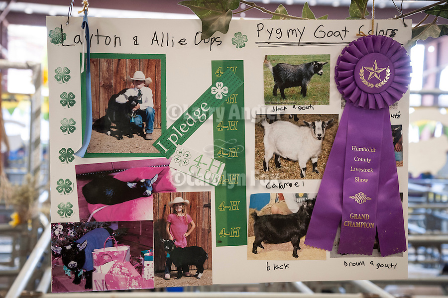 Winnemucca's Tri County Fair, Labor Day weekend<br /> <br /> 4Hers with their animals in the barn during the Sunday livestock auction