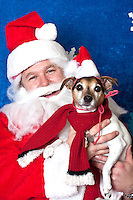 Katie poses for a holiday photo with Santa at Pet Pros in Redmond, WA to help raise money for Dogs Deserve Better on December 11, 2010. (photo by Karen Ducey)