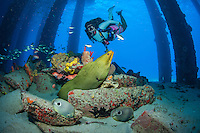 Ashley Burger at the Fredericksted Pier.with a green moray (Gymnothorax funebris).St. Croix.U.S. Virgin Islands