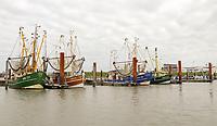 Fischkutter im Hafen von Norddeich - Norddeich 23.07.2020: Fahrt mit der Nordmeer zu den Seehundbänken