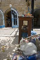 Asie/Israël/Galilée/Safed: Place William et Anne Kapell ou se trouvent de nombreux ateliers d'artistes - Chat domestique