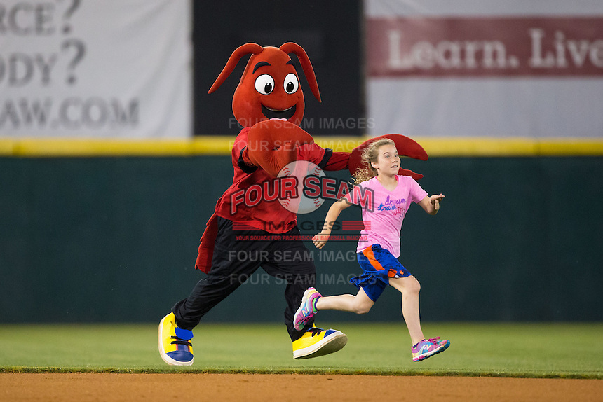 A young fan races Hickory Crawdads mascot Conrad the Crawdad across the field between innings of the game against the Rome Braves at L.P. Frans Stadium on May 12, 2016 in Hickory, North Carolina.  The Braves defeated the Crawdads 3-0.  (Brian Westerholt/Four Seam Images)