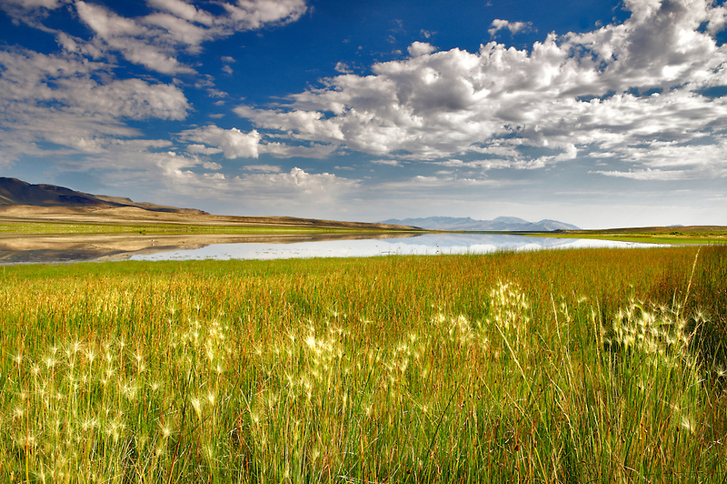 Grassy meadow on shore of Gridley Lake. Nevada