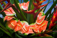 Tropical flower display with Anthurium.