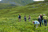Heath tundra near Hatcher Pass, Alaska,  Independence Mine State Historical Park, Pacific Horticulture Society tour