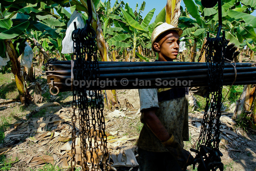A young Colombian boy preparing the aircable for banana transport on the banana plantation in Aracataca, Colombia, 14 March 2006. Eighty percent of the exported bananas in the world are grown in Latin America. Local farms have no other alternative than to sell for a price offered by the multinational company. When working conditions and ecology is in question, the corporations do not have any responsibility as they do not own plantations. Local governments in the attempt of organizing banana export provide low duty taxes on export, they try to eliminate social and enviromental politics to attract the big companies to their countries.