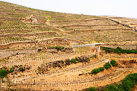 L'Ermite vineyard on the top of the hill. The Hermitage vineyards on the hill behind the city Tain-l'Hermitage, on the steep sloping hill, stone terraced. Sometimes spelled Ermitage. Tain l'Hermitage, Drome, Drôme, France, Europe