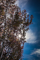 Branches full of fall colors, a sky of blue with tufts and streaks  of white clouds and a sun burst shining through.  Our sun.