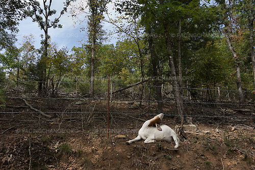 Madison County, Arkansas<br />