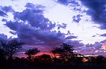Dusk, Serengeti, Tanzania, 2006.