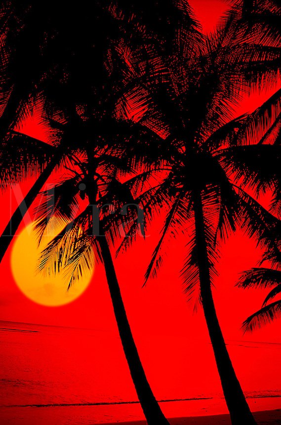 Sunset on beautiful beach with palm trees.
