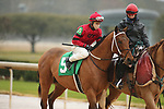 February 6, 2021: Boldor (5) with jockey David Cabrera aboard before the running of the King Cotton Stakes at Oaklawn Racing Casino Resort in Hot Springs, Arkansas on February 6, 2021. Justin Manning/Eclipse Sportswire/CSM