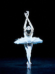 English National Ballet The Dying Swan