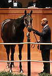 Hip #89 C.S. Silk consigned by Romans Racing & Sales sold for $1,000,000 to TOWN & COUNTRY FARMS at the Fasig Tipton November Sale on November 6, 2011.
