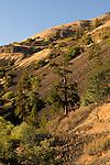 Columbia River Gorge Hillside