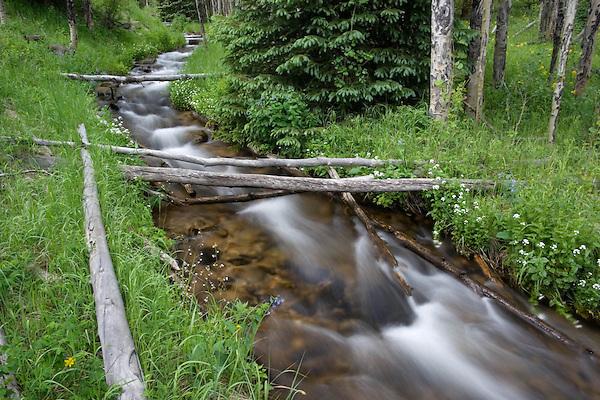 Hidden Valley stream in  Aspen tree forest, Rocky Mountain National Park, Estes Park, Colorado. .  John leads private photo tours throughout Colorado. Year-round Colorado photo tours.