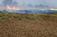 ETHIOPIA Gambela, Abobo, farm land of company Saudi Star Agricultural Development owned by Mohamed al-Amoudi , burning of bush forest for new cultivation / AETHIOPIEN Gambella, Abobo, grosse Farm der Firma Saudi Star Agricultural Development  des Eigentuemer Mohamed al-Amoudi, Abbrennen des Buschwald fuer neue Felder