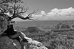 Artist at work, Grand Canyon, North Rim