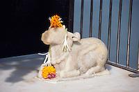 Nandi-Statue auf dem Marine Drive, Bombay (Mumbai), Maharashtra, Indien