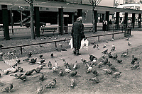 Montreal (qc) CANADA - file Photo - 1990 - <br /> <br /> <br /> - an old woman carrying bags walk through birds at the small park in front on the (Old) Montreal Forum (now AMC Cinema) located on Sainte-Catherine and Atwater street.  NO MODEL RELEASE.