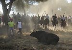 The bull lays down in the 'El toro de la Vega' (The bull of the plain) bullfight, September 16, 2008 in Tordesillas, near Valladolid, © Pedro ARMESTRE.