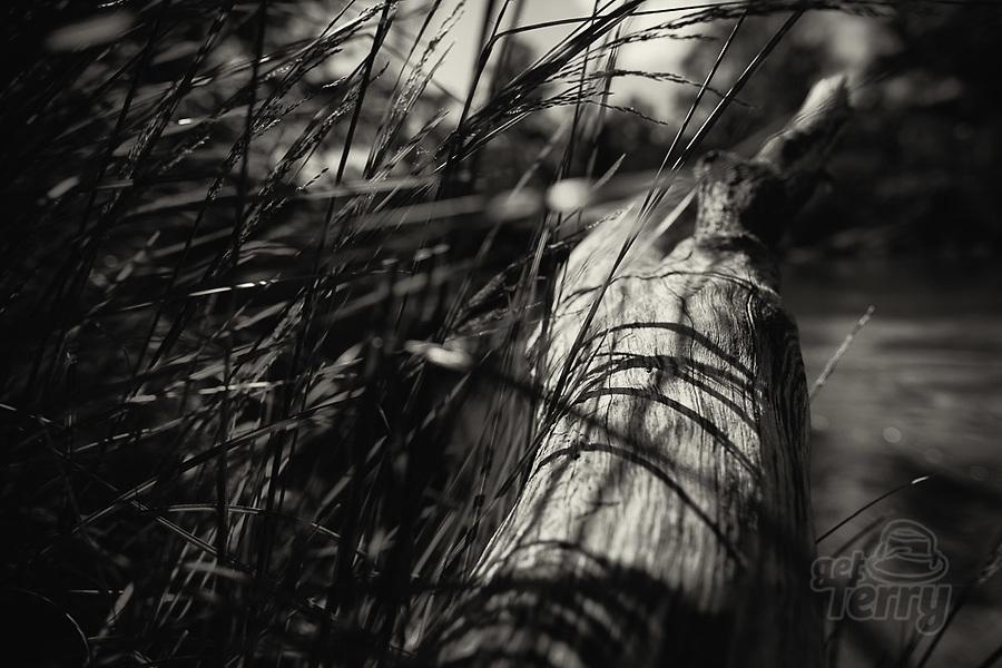Image Ref: YV495<br /> Location: Normans Reserve, Warrandyte<br /> Date of Shot: 17.10.20