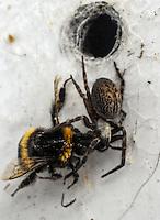 150102 Spider v Bumblebee
