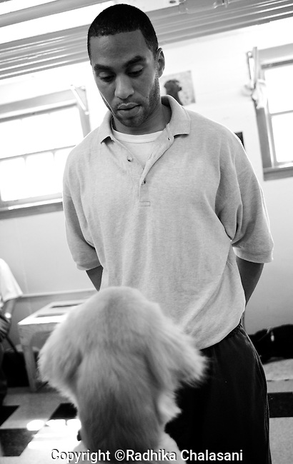 BEACON, NEW YORK:  Charlie, in prison for manslaughter, works with  a 5-month-old puppy also named Charlie to get him to learn to obey a sit command in the Puppies Behind Bars Program at Fishkill Correctional Facility. Charlie says the program has helped him give back to society and taught him patience and responsibility. The puppies arrive at 8 weeks-old and remain at the prisons, mostly working with one inmate, for approximately 20 months. Fishkill Correctional Facility is a medium security prison in New York with 22 men in the puppy program.