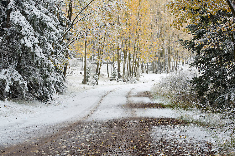 An early snowstorm blankets the aspen-lined (Populus tremuloides) Terry Flat Road near Escudilla Mountain.