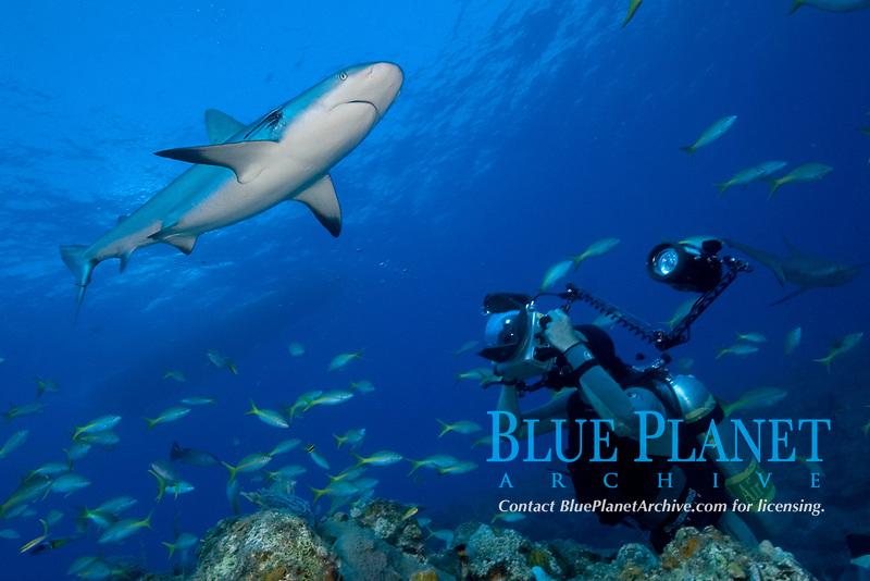 Carribean reef shark, Carcharhinus perezii, and diver photographer in the Bahamas, Caribbean, Atlantic