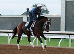 October 16, 2015:  Mwshawish trains in preparation for the Breeder's Cup.   Candice Chavez/ESW/CSM