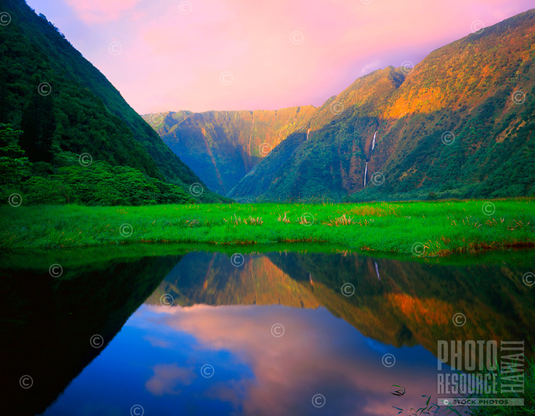 """Waimanu Dawn: Dawn's warmth unfolds over serene Waimanu Stream, mirroring the valley beyond, Hawai'i Island. Shot on 4x5"""" transparency film, available only as a fine art print."""