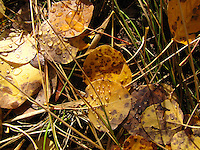 Autumn leaves in the grass sparkle with drops of rain.