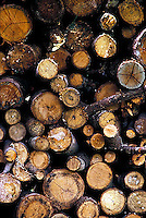 Stacked firewood<br />