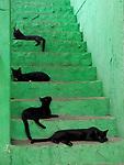 Los gatos de Pingala / Taboga,  Panamá.<br /> <br /> Edición de 10 | Víctor Santamaría.