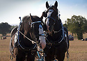 05/10/16 <br /> <br /> Shire horses Toby and Magnus.<br /> <br /> Heavy horses compete to plough the straightest furrows at the 111th Brailsford Ploughing Match, near Ashbourne in the Derbyshire Dales.<br /> <br /> All Rights Reserved: F Stop Press Ltd. +44(0)1773 550665   www.fstoppress.com