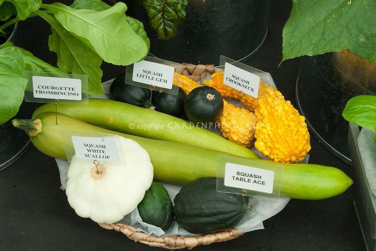 Different types of squash in basket together with sign labels, including Little Gem, Crookneck, White Scallop, Courgette Zucchini Trombincino, Acorn Squash Little Ace