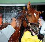 28 April 10:  Line of David gets a bath out at Churchill Downs in Louisville, Kentucky
