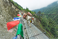 Horses carrying fuel supplies out of Lukla, Khumbu, Nepal