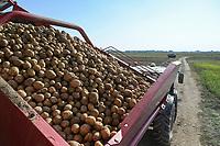 CROATIA, Belica, potato farming at Dodlek Agro / KROATIEN, Belica, Kartoffelanbau bei Dodlek Agro