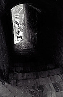 Woman and dog approaching tunnel<br />