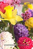 Gisela, FLOWERS, BLUMEN, FLORES, photos+++++,DTGK1978,#f#