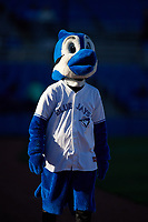Dunedin Blue Jays mascot DJay before a game against the Clearwater Threshers on April 8, 2017 at Florida Auto Exchange Stadium in Dunedin, Florida.  Dunedin defeated Clearwater 12-6.  (Mike Janes/Four Seam Images)