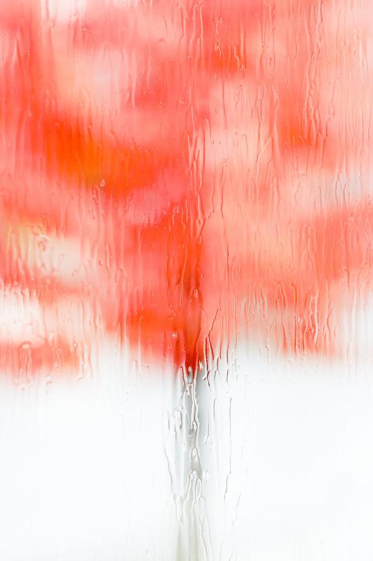Fall colored maple tree through rainy window.