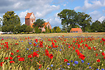 Denmark, Zealand, Glim, near Roskilde: Glim Kirke, set amongst poppy field | Daenemark, Insel Seeland, Glim, bei Roskilde: Dorfkirche Glim Kirke