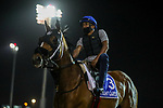 March 25, 2021: Godolphin Mile contender Avant Garde on the track at Meydan Racecourse for trainer Gustavo Delgado, Dubai, UAE.<br />