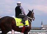 LOUISVILLE, KY - MAY 04:  Majesto (Tiznow x Unacloud, by Unaccounted For) stands on the track at Churchill Downs before exercising in preparation for the Kentucky Derby. Owner Grupo 7C Racing Stable, trainer Gustavo Delgado.(Photo by Mary M. Meek/Eclipse Sportswire/Getty Images)