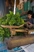Afrique/Afrique du Nord/Maroc/Rabat: Menthe fraiche sur l'étal du marchand d'herbes de la médina