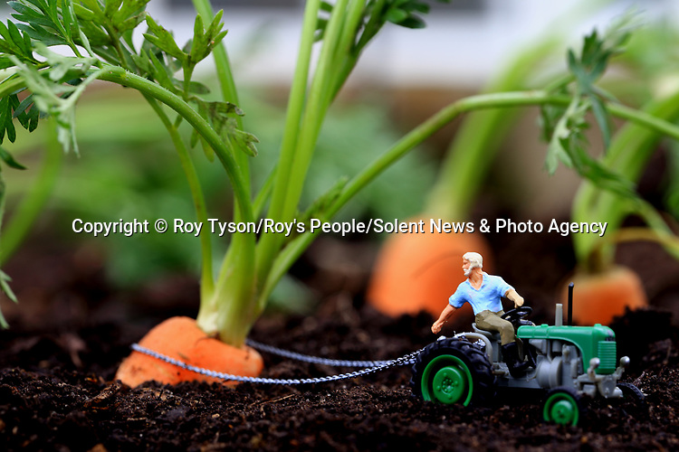 Pictured: Carrots<br /> <br /> Tiny figurines give a new perspective on everyday objects as they are posed interacting with them in their miniature world.  Artist Roy Tyson creates witty and intriguing imagery with customised miniature figures, under the name Roy's People.<br /> <br /> Since 2012, he has been photographing his miniature world on the streets of London and beyond.  SEE OUR COPY FOR DETAILS.<br /> <br /> Please byline: Roy Tyson/Roy's People/Solent News<br /> <br /> © Roy Tyson/Roy's People/Solent News & Photo Agency<br /> UK +44 (0) 2380 458800